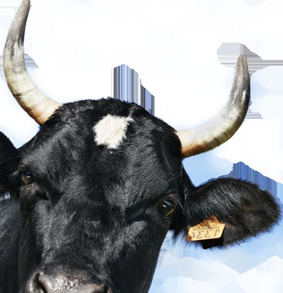 Monseigneur cr py au salon de l 39 agriculture riposte for Fine salon agriculture 2017